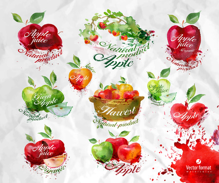 fall harvest: Apples.Vector format Illustration
