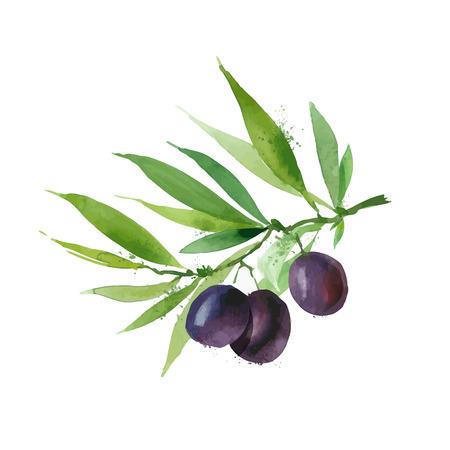 olive green: Olives. Vector format