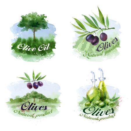 olivo arbol: Oliva. El formato del vector