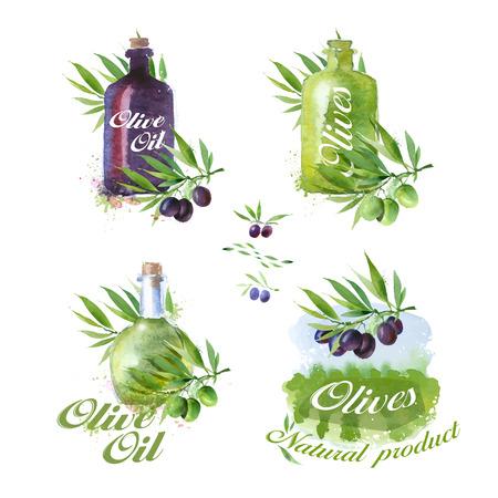 olive oil bottle: Olive icons. Vector format Illustration