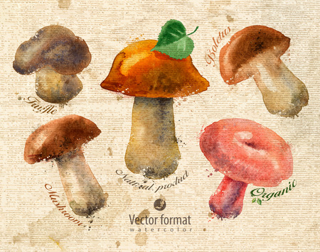 edible mushroom: Mushrooms.  Illustration