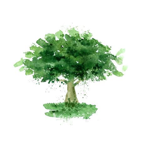 conservancy: Tree.  Illustration