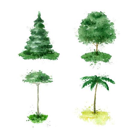 cedar: Tree. Illustration