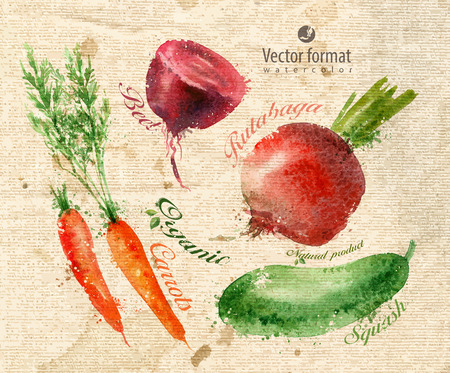 root vegetables: Vegetables.  Illustration