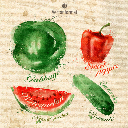 gherkin: Vegetables.  Illustration