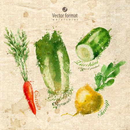 courgette: Vegetables.  Illustration