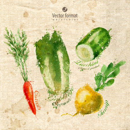 zucchini: Vegetables.  Illustration