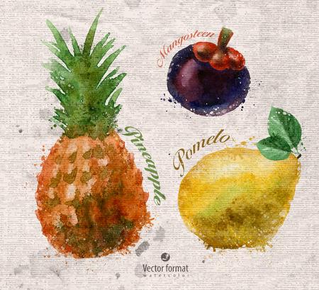 exotica: Fruits Illustration