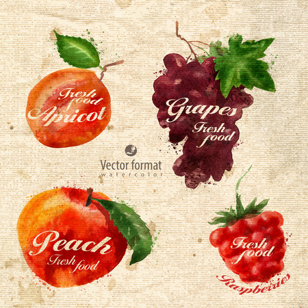 apricot jam: Fruits Illustration