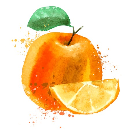 watercolor drawing. Orange on a white background. vector illustration