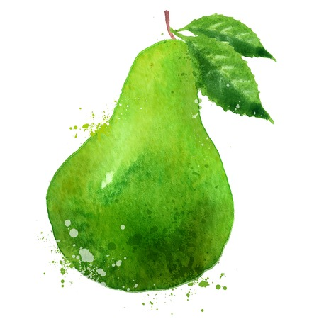 watercolor drawing. pear on a white background. vector illustration Vector