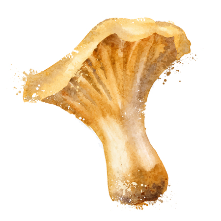 aquarelle: watercolor drawing. fungus on a white background. vector illustration