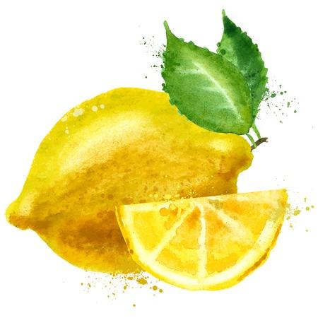 aquarel. citroen op een witte achtergrond. vector illustratie Vector Illustratie