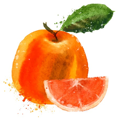 vibrant colors: watercolor. fruit on a white background. vector illustration