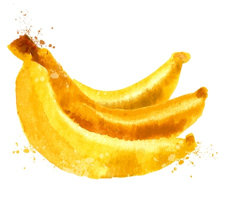 aquarelle: Watercolor. bananas on a white background. vector illustration