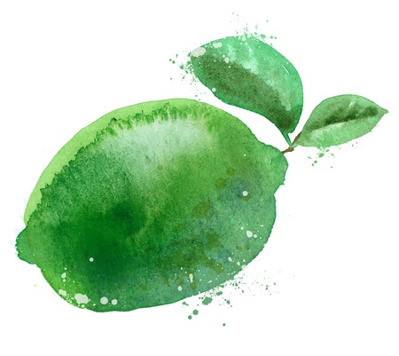 watercolor. lime on white background. vector illustration