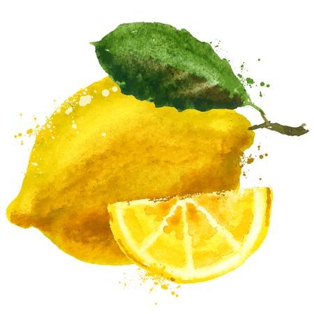 lemon: acuarela. lim�n sobre un fondo blanco. ilustraci�n vectorial Vectores