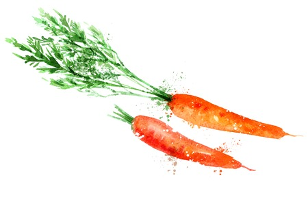 watercolor. carrot on a white background. vector illustration Vettoriali