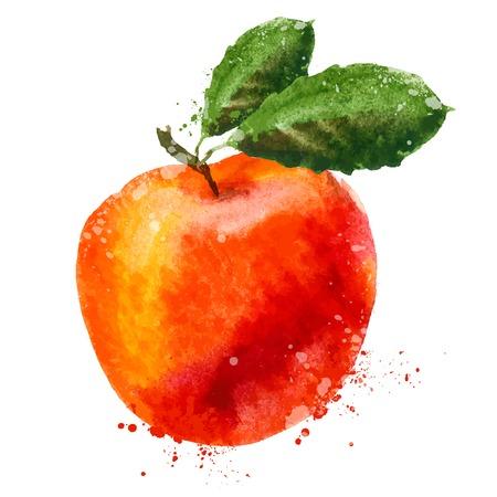 apfel: Aquarell. Obst auf einem wei�en Hintergrund. Vektor-Illustration