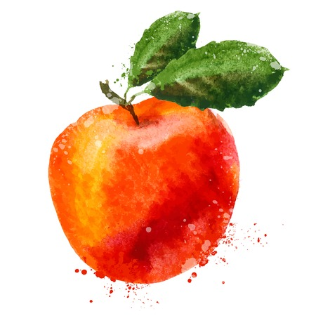 fresh water splash: watercolor. fruit on a white background. vector illustration