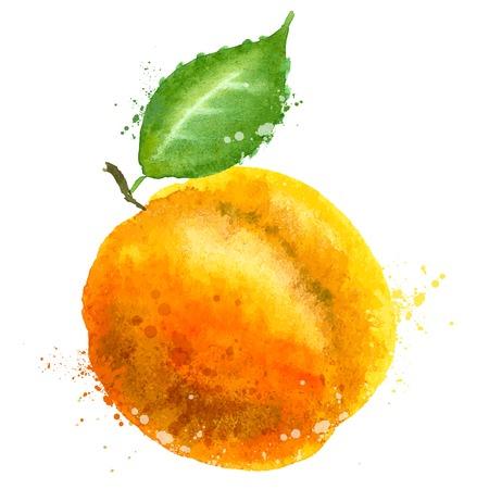 durazno: acuarela. frutas sobre un fondo blanco. ilustración vectorial