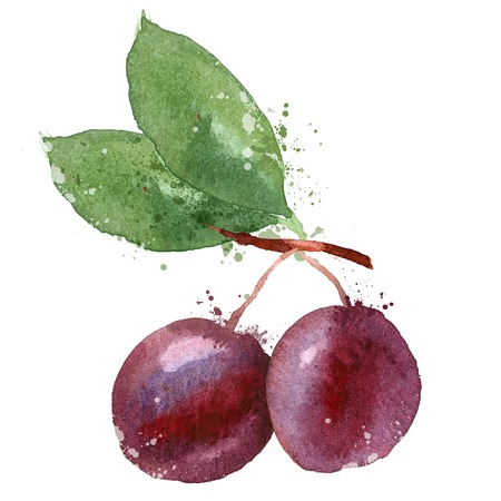 plum on a white background. vector illustration