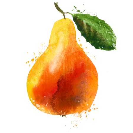 watercolor. PEAR on a white background. vector illustration