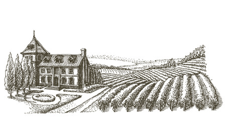 tuscany vineyard: sketch. home and harvest on a white background. vector illustration Illustration