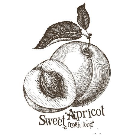 abrikoos op een witte achtergrond. schetsen. vector illustratie Stock Illustratie