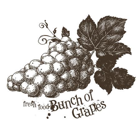 grapes on a white background. sketch. vector illustration Illustration