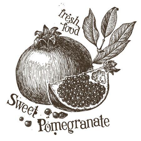 pomegranate juice: sketch. fruit on a white background. vector illustration