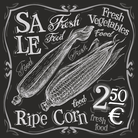 ripe corn on a white background. vector illustration