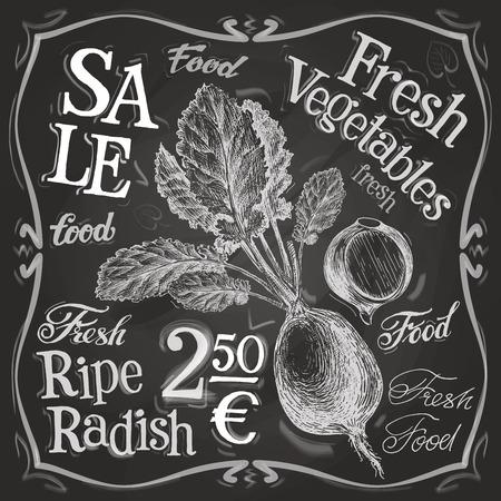 ripe radish on a black background. vector illustration Vector