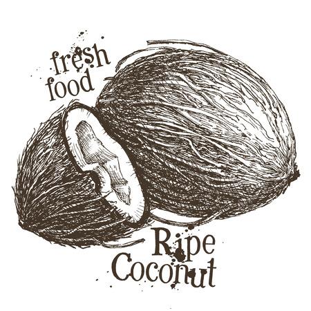 palms: coco madura sobre un fondo blanco. ilustraci�n vectorial