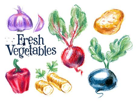 horseradish: fresh vegetables on white background. vector illustration Illustration