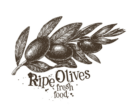 deli: fresh olives on a white background. vector illustration