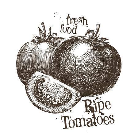 vegetable gardening: fresh vegetables on white background. vector illustration Illustration