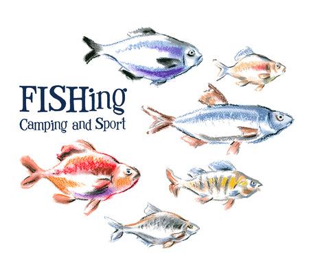 bream: fresh fish on a white background. vector illustration Illustration