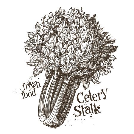 gastronome: fresh vegetables on white background. vector illustration Illustration
