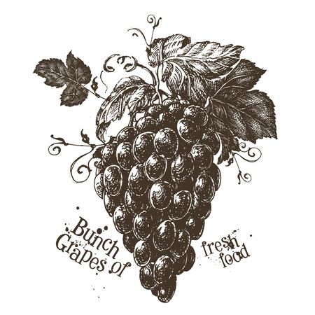 deli: fresh grapes on a white background. vector illustration
