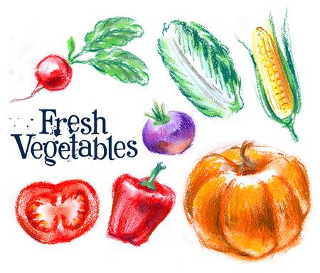 rutabaga: agriculture on a white background. illustration, sketch