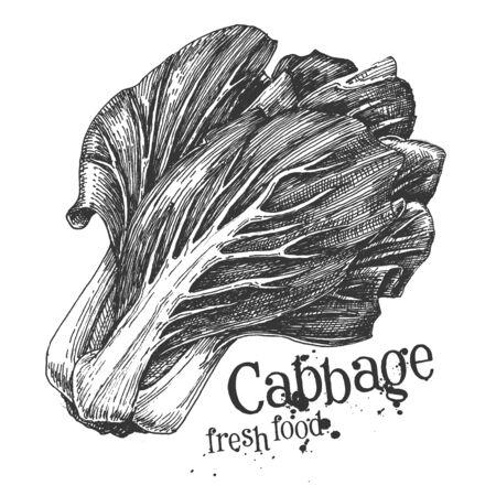 brassica: fresh vegetables on a white background. illustration Stock Photo