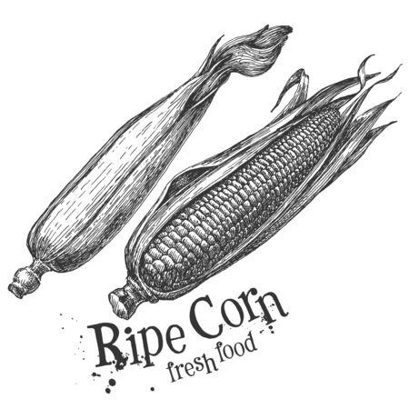 husks: fresh vegetables on a white background. illustration Stock Photo