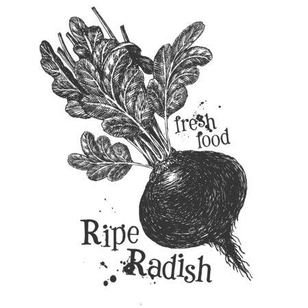 rutabaga: fresh vegetables on a white background. illustration Stock Photo