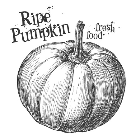 black and white plant: fresh vegetables on a white background. illustration Stock Photo