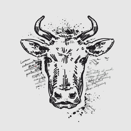 cow head: cow head on grey background. sketch. illustration