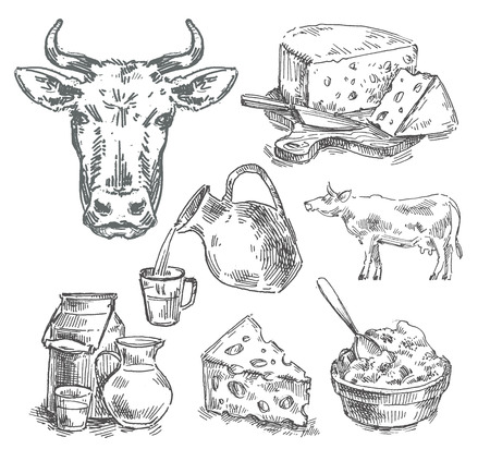 milk cheese: dairy products on white background. sketch. illustration
