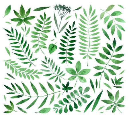 hierba y hojas aisladas sobre fondo blanco. ilustración