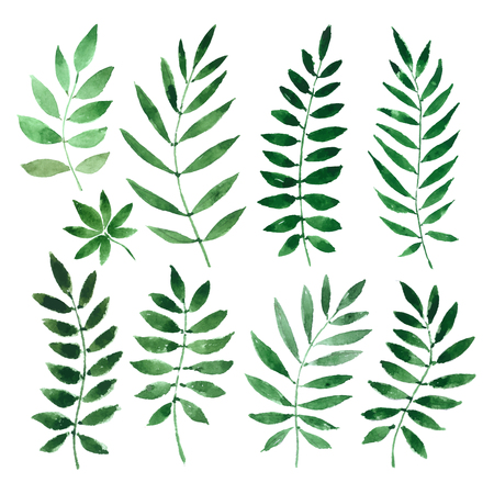 foliage: plants, grass on a white background. illustration