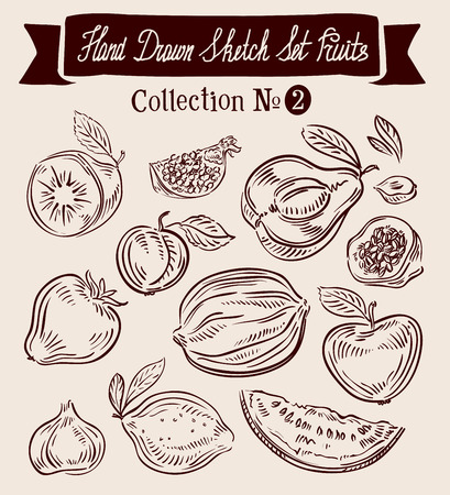 prune: hand-drawn collection of fruit. sketch. vector illustration